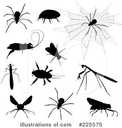House Fly Clipart #225575 by KJ Pargeter