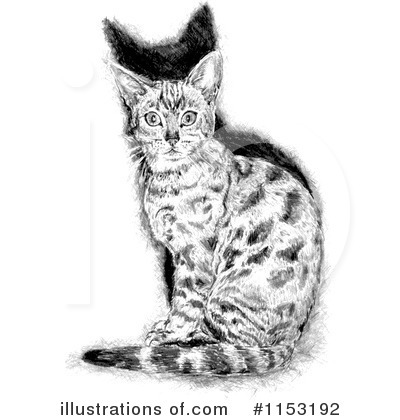 Cat Clipart #1153192 by lineartestpilot