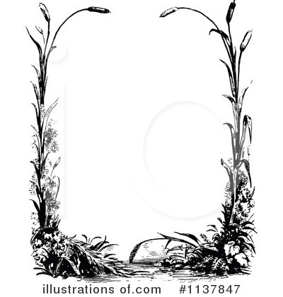 Images Of Cattail Wallpaper Border Calto