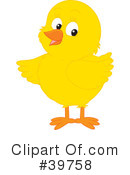 Royalty-Free (RF) Chick Clipart Illustration #39758