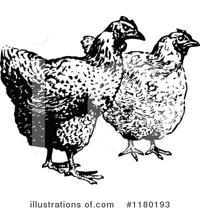 Chicken Clipart #1180193 by Prawny Vintage