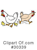Chickens Clipart #30339