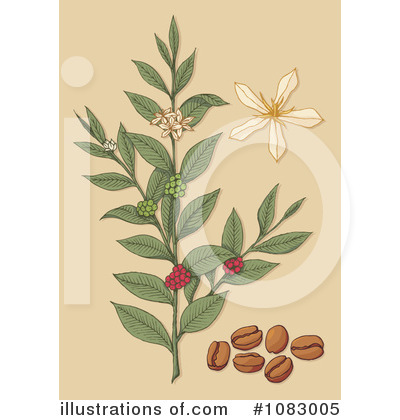 Coffee Berry Clipart #1083005 by Any Vector