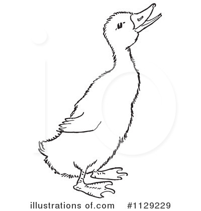 Duck Clipart #1129229 by Picsburg