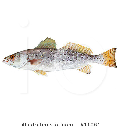 Fish Clipart #11061 by JVPD