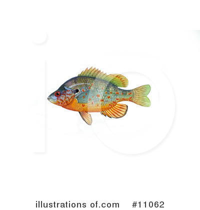 Fish Clipart #11062 by JVPD