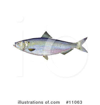 Fish Clipart #11063 by JVPD