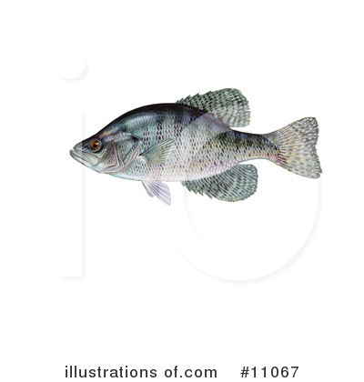 Fish Clipart #11067 by JVPD