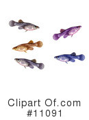 Fish Clipart #11091 by JVPD