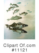 Fish Clipart #11121 by JVPD