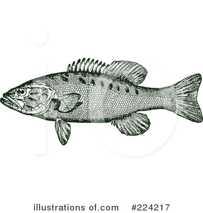 Fish Clipart #224217 by BestVector