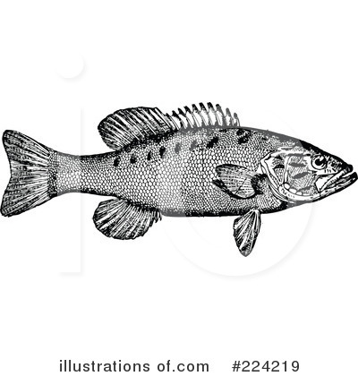 Fish Clipart #224219 by BestVector