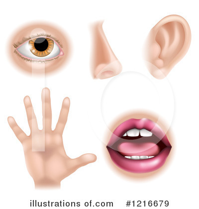 Five Senses Clipart #1216679 by AtStockIllustration
