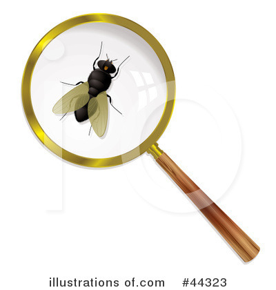 House Fly Clipart #44323 by michaeltravers