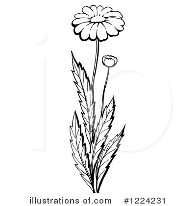 Daisies Clipart #1224231 by Picsburg