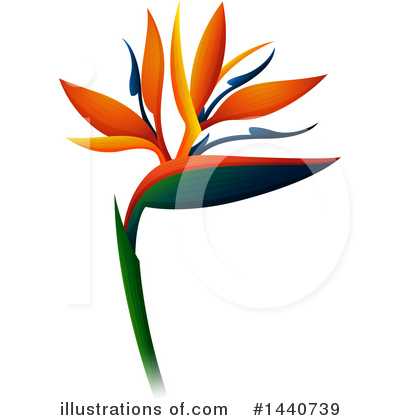 Bird Of Paradise Clipart #1440739 by Graphics RF