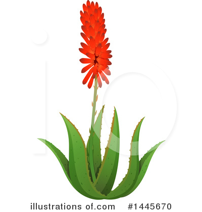 Aloe Clipart #1445670 by Graphics RF