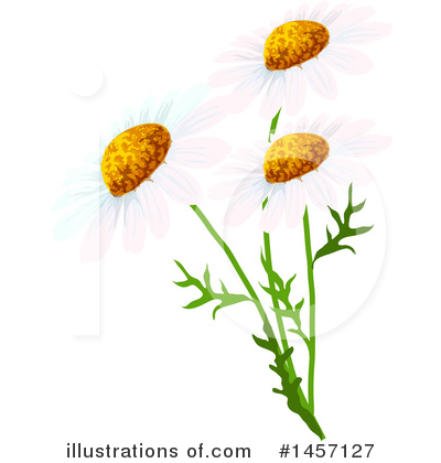 Daisy Clipart #1457127 by Vector Tradition SM