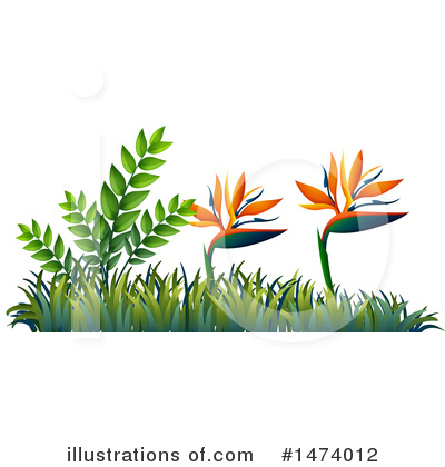 Bird Of Paradise Clipart #1474012 by Graphics RF