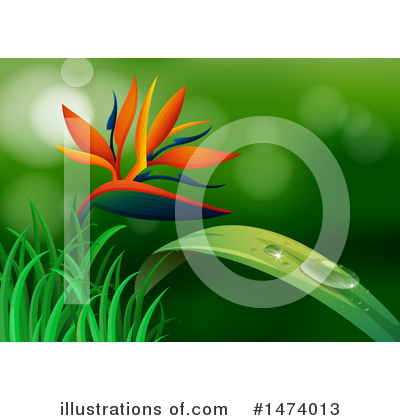 Bird Of Paradise Clipart #1474013 by Graphics RF