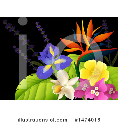 Bird Of Paradise Clipart #1474018 by Graphics RF