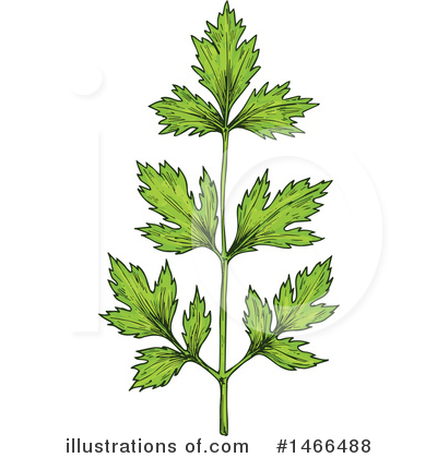 Parsley Clipart #1466488 by Vector Tradition SM