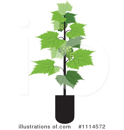 Grape Vine Clipart #1114572 by Lal Perera