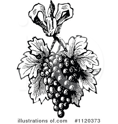 Grapes Clipart #1120373 by Prawny Vintage