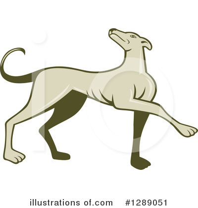 Greyhound Clipart #1289051 by patrimonio