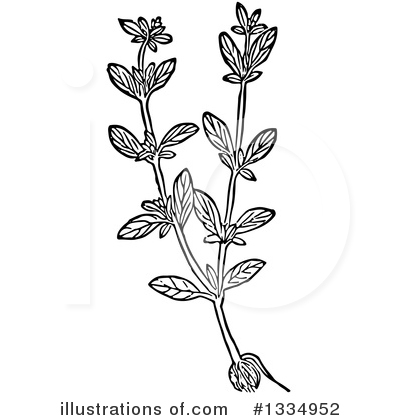 Herb Clipart #1334952 by Picsburg