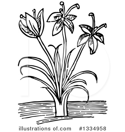 Herb Clipart #1334958 by Picsburg