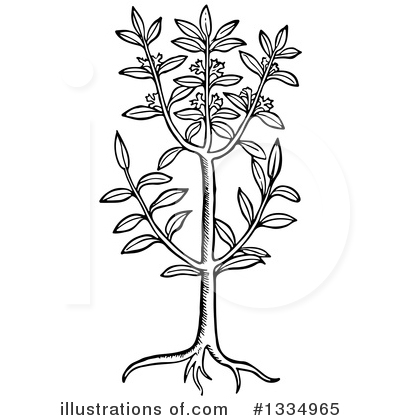 Herb Clipart #1334965 by Picsburg
