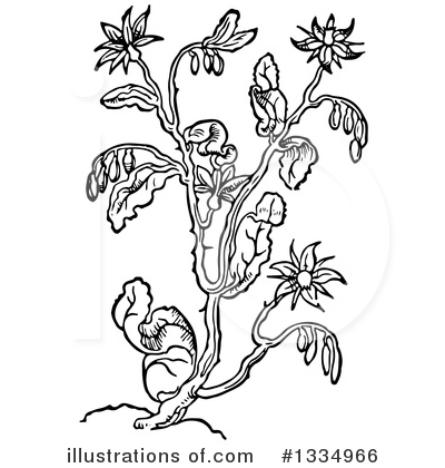Royalty-Free (RF) Herb Clipart Illustration by Picsburg - Stock Sample #1334966
