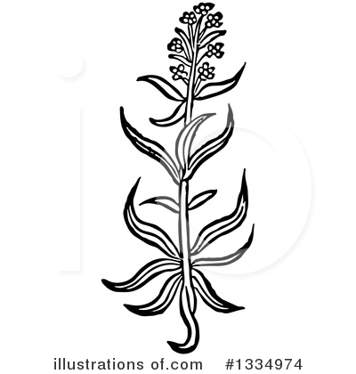 Herb Clipart #1334974 by Picsburg