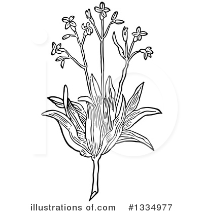Herb Clipart #1334977 by Picsburg
