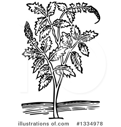 Herb Clipart #1334978 by Picsburg