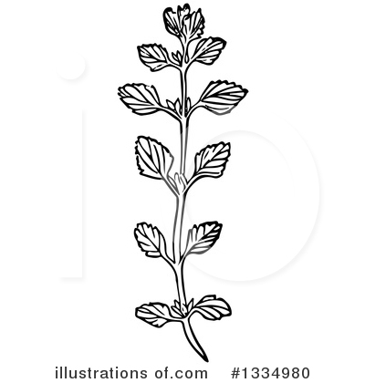 Herb Clipart #1334980 by Picsburg