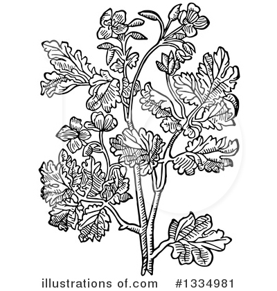 Herb Clipart #1334981 by Picsburg