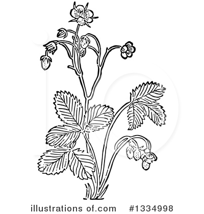 Royalty-Free (RF) Herb Clipart Illustration by Picsburg - Stock Sample #1334998