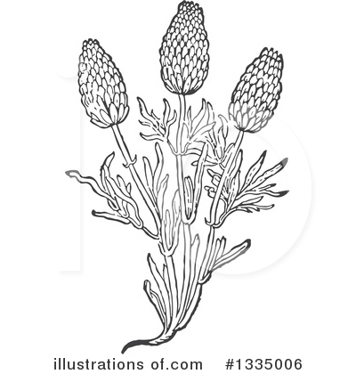 Lavender Clipart #1335006 by Picsburg