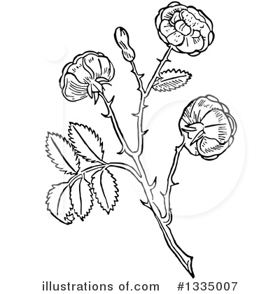 Rose Clipart #1335007 by Picsburg