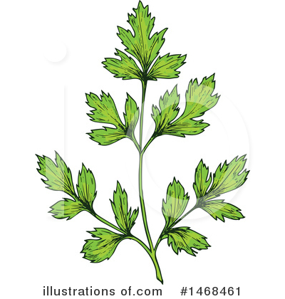 Parsley Clipart #1468461 by Vector Tradition SM
