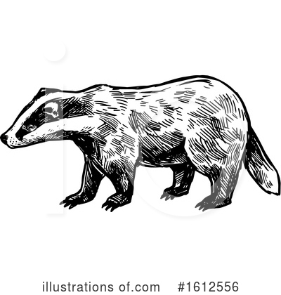 Honey Badger Clipart #1612556 by Vector Tradition SM