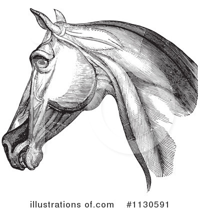 Horse Anatomy Clipart #1130591 by Picsburg