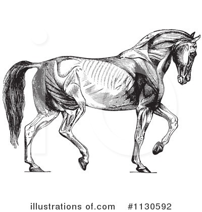 Horse Anatomy Clipart #1130592 by Picsburg