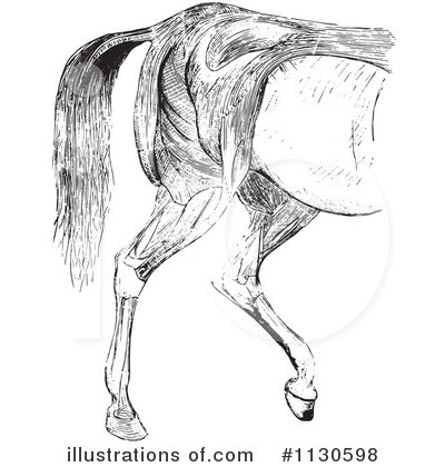 Horse Anatomy Clipart #1130598 by Picsburg