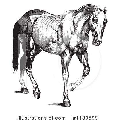 Horse Anatomy Clipart #1130599 by Picsburg
