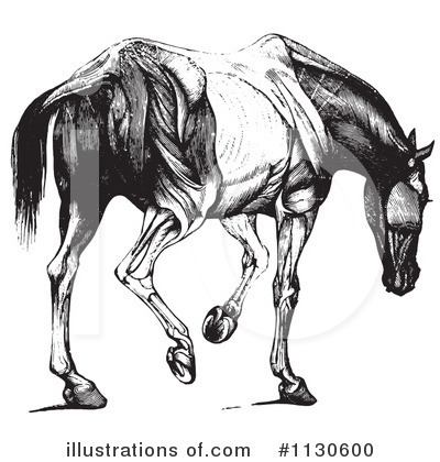 Horse Anatomy Clipart #1130600 by Picsburg