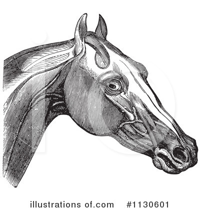 Horse Anatomy Clipart #1130601 by Picsburg