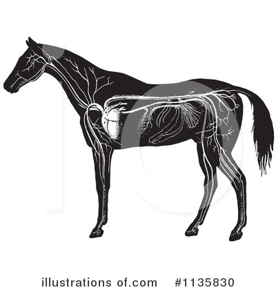 Royalty-Free (RF) Horse Anatomy Clipart Illustration by Picsburg - Stock Sample #1135830